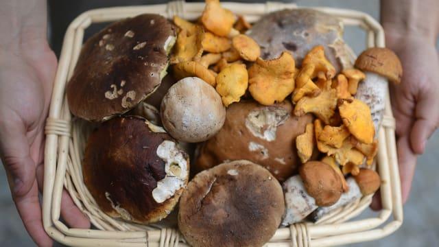 Ein Körbchen mit Pilzen