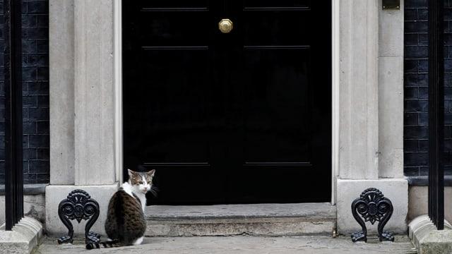 Katze vor der Downing Street 10.