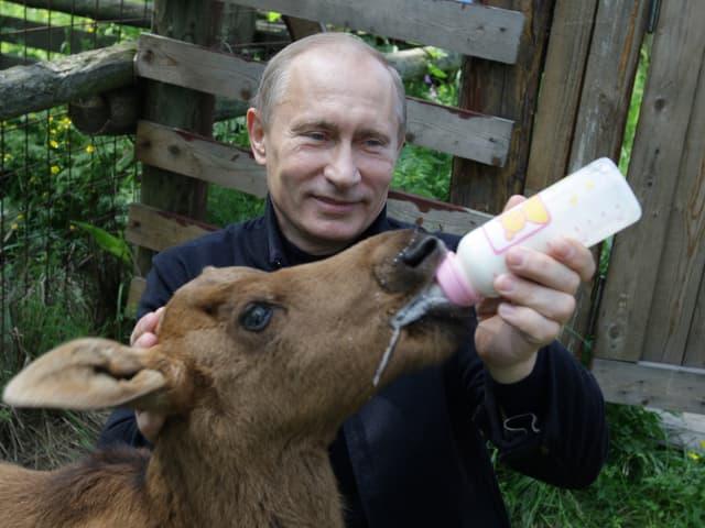 Putin füttert jungen Elch