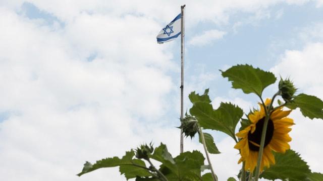 Eine israelische Fahne im Wind, im Vordergrund eine Sonnenblume.