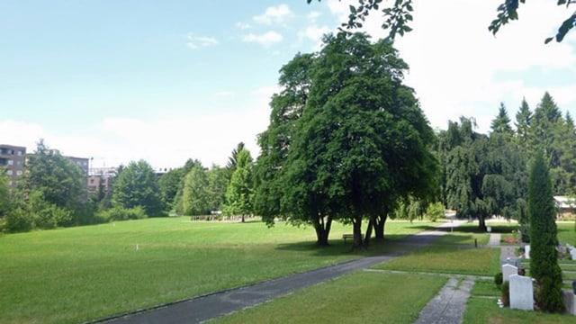 Friedhof mit Grabsteinen und einer grossen Wiese an einem Waldrand.