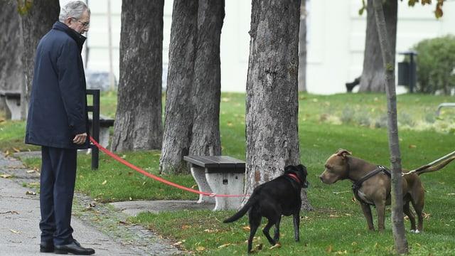 Ein Mann mit Hunden im Park (Leine orange)
