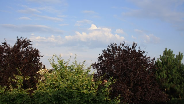 Altocumuls castellanus sind sichere Vorboten von Gewittern, so heute Morgen in Winterthur.