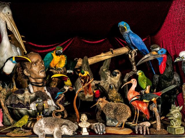 Verschiedene ausgestopfte Tiere, dazwischen eine Menschenfigur.