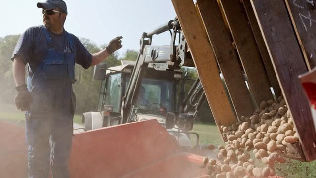 Ein Bauer leert eine grosse Box Kartoffeln