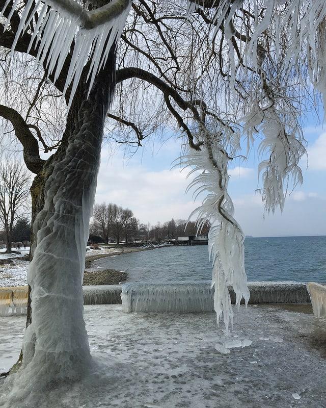Ein mit einer dicken Eisschicht umhüllter Baum am Ufer.
