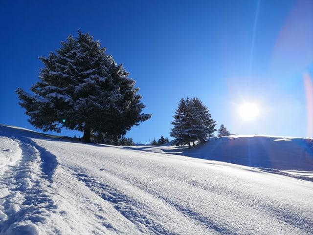 Neuschnee und Sonnenschein laden zum Schneewandern ein. Herrlich verschneite Landschaft mit blauem Himmel und verschneite Bäume.
