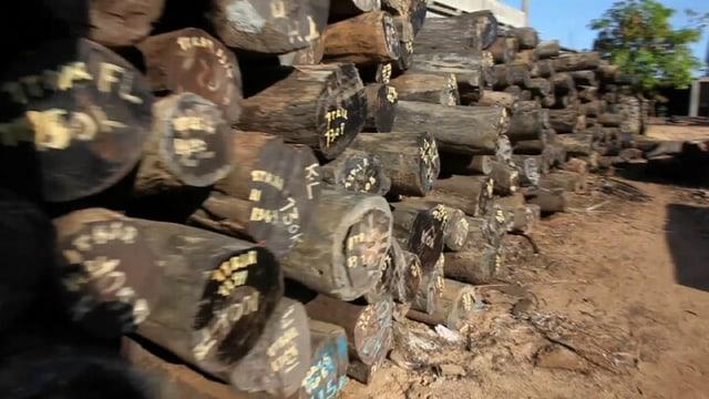 Tropenholz in Gefahr