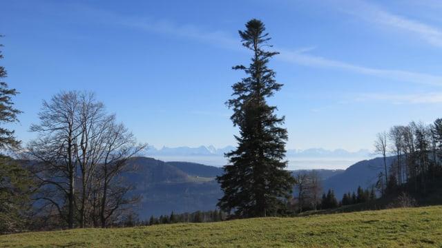 Blick vom Zentner Richtung Nebelfeld dem Jurasdfuss entlang.