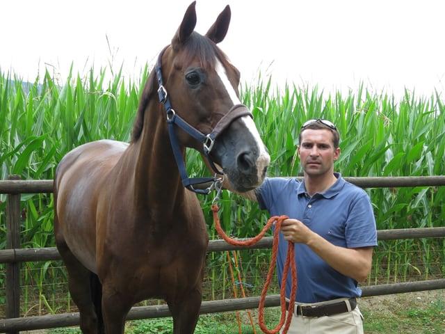 Ein Pferd und ein Mann.