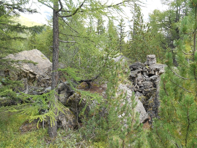 Massive Felsbrocken im Wald.