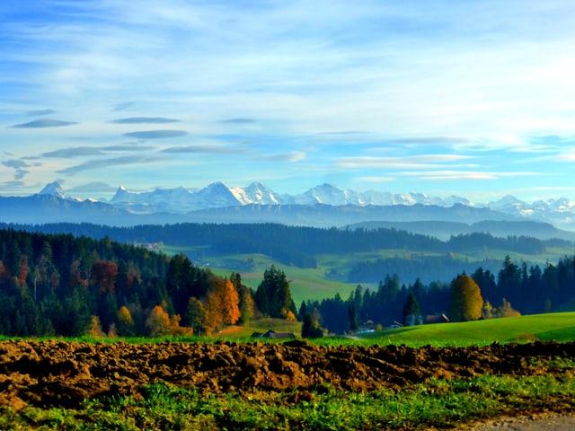 Grüne Wiesen und farbige Bäume bilden den Vordergrund des Bildes. Im Hintergrund stehen die weissverschneiten Alpen, Föhnwolken zieren den Himmel.