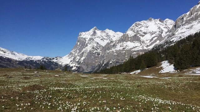 Der Auffahrtstag war wolkenlos, nicht nur in Grindelwald.