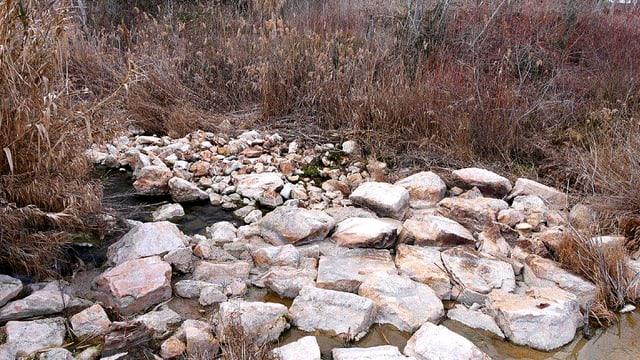 Der Tajo windet sich als Rinnsal in die Ufervegetation und verschwindet.