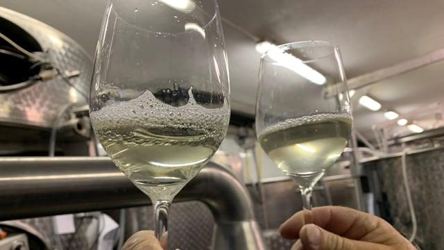 Links ein Glas mit Wein, der bereits filtriert wurde, rechts das Glas mit dem noch trüben und unfiltrierten Wein.