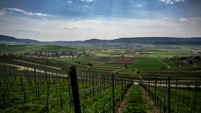 Ein abfallender Weinberg, im Hintergrund Agrarflächen und ein Dorf.