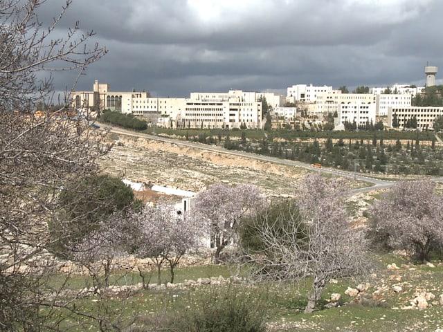 Im Hintergrund Häuserzeile, davor Bäume mit Knospen