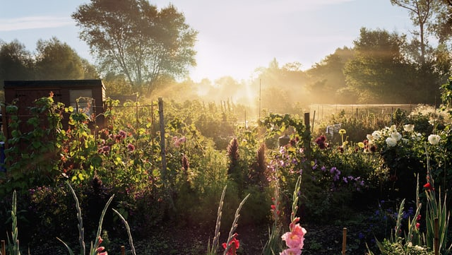 Ein Garten mit Blumen und Sonnenstrahlen