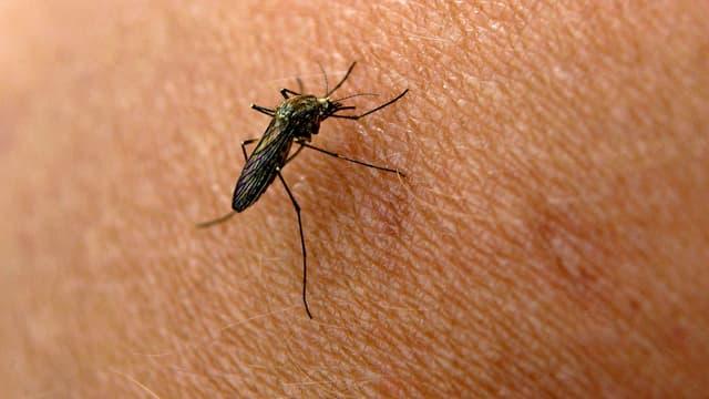 Stechmücke auf Haut