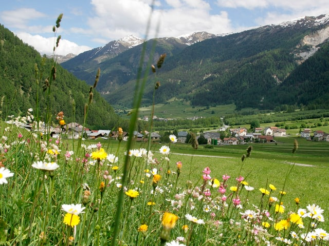 Blumenwiese in Valchava, Münstertal
