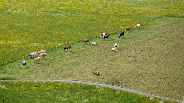 Satte grüne Wiesen, Ruhe und Idylle: In Berg/TG wohnen die glücklichsten Menschen der Schweiz.