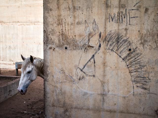 Ein Pferd hinter einer Betonmauer, auf die jemand ein Pferd gezeichnet hat.