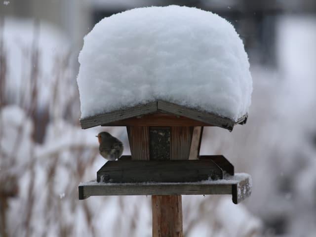 Ein Vogelhaus mit einem 20-Zentimeter-Schneedach.