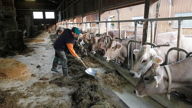 Video «Bauern auf die Schlachtbank?» abspielen