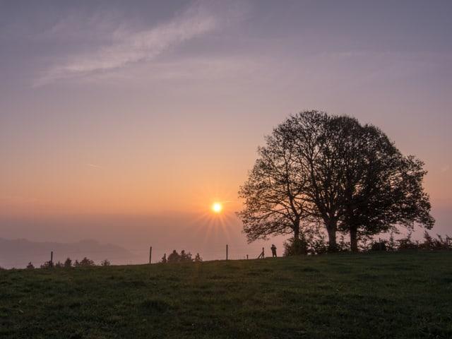 Wiese und Baum, über dem Dunst aufgehende Sonne.