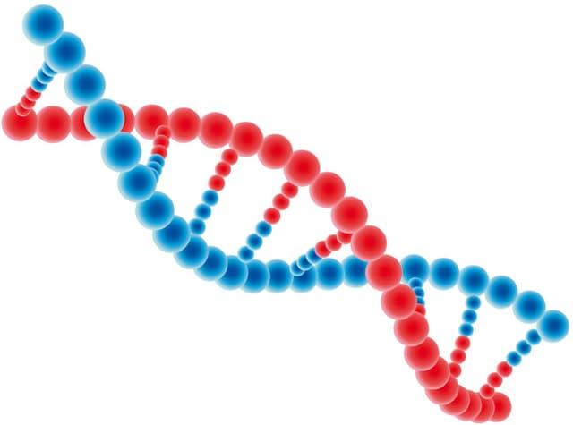 Schematische Darstellung einer DNA-Helix