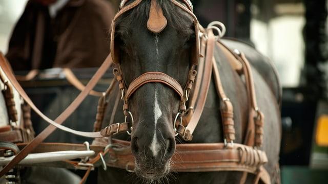 Pferd, Kutsche
