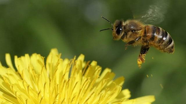 2019 wird wohl schlechtestes Honigjahr seit langem