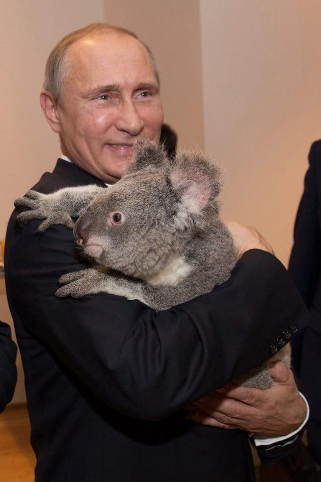 Wladimir Putin mit Koala