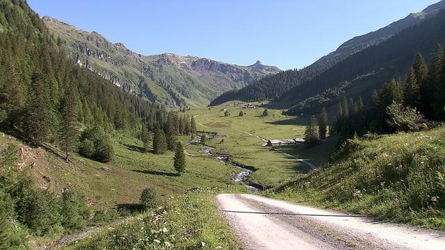 Ein Bergtal mit Wald und Bach