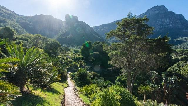 Video «Magische Gärten - Südafrika: Kirstenbosch» abspielen
