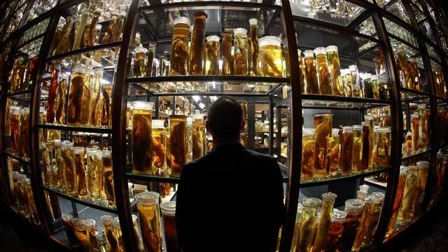 Fasziniert betrachtet ein Besucher die «Nass»-Sammlung des Berliner Museums für Naturkunde.