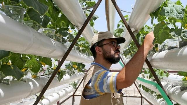 Ein Mann mit Kappe und Brille blickt auf eine weisse Röhre, aus der Pflanzen ragen.