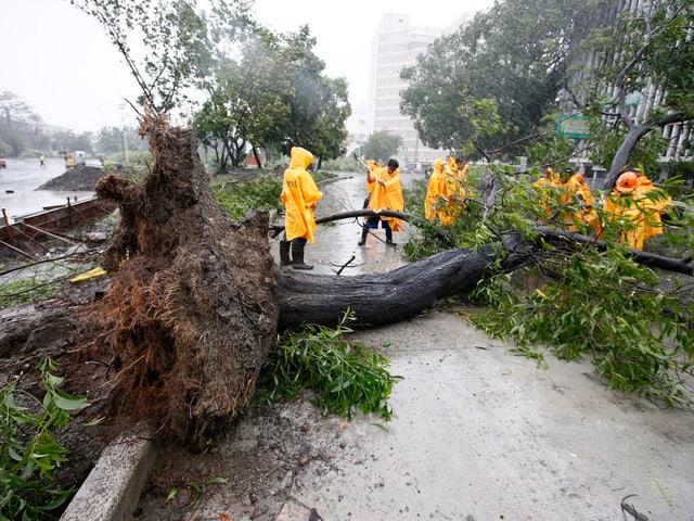 Ein umgestürzter, entwurzelter Baum liegt auf der Strasse, darum herum ein paar Arbeiter in gelben Pellerinen.