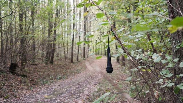 Ein Mikrofon hängt im Wald von einem Ast herunter.