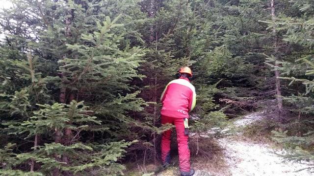 In lavurer forestal taglia in pignol.