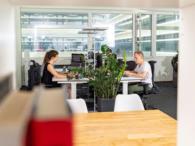 Eine Frau und eine Mann sitzen an ihren Arbeitsplätzen im Büro