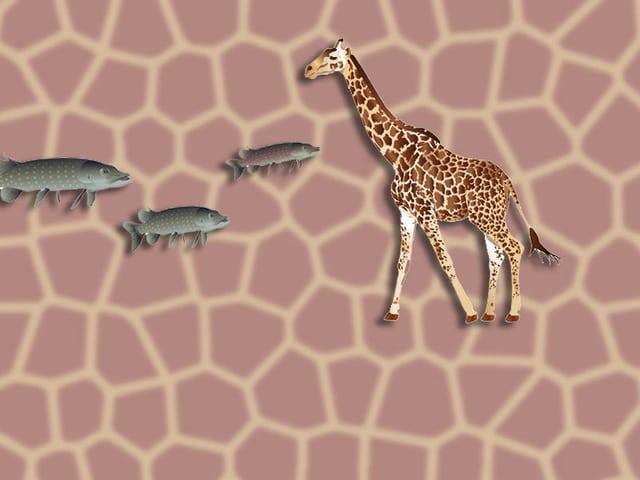 Giraffe und Fische