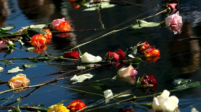 Rosen treiben auf Wasser.