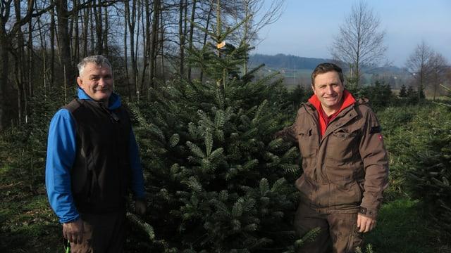 Zwei Männer posieren neben Weihnachtstanne