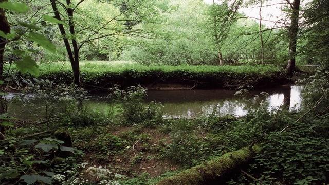 Blick auf ein grün bewachsenes Flussufer.