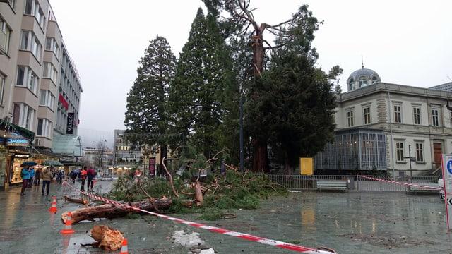 Beschädigter Baum in Chur