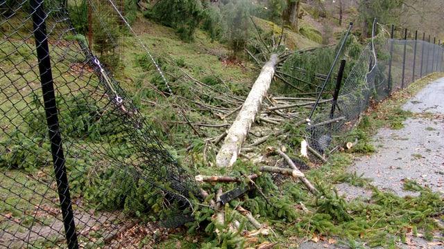 Geknickter Baum und kaputter Zaun in einem Park.