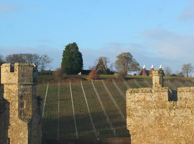 Rebberg hinter einer mittelalterlichen Burg