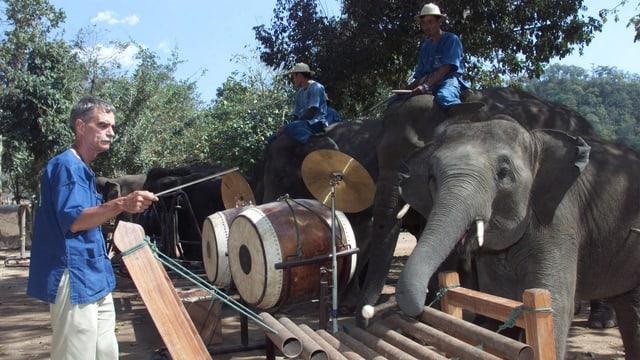 Ein Dirigent dirigert das Elefanten Orchester