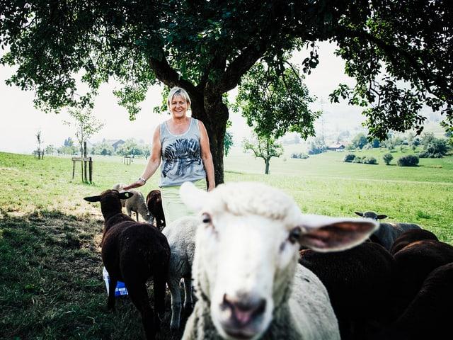 Suzanne inmitten von Schafen.